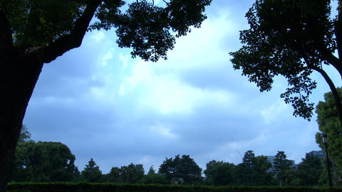 Blue Sky and Cloud and Trees 02 ビデオ