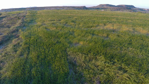 Top of hills covered in lush green grass, fresh meadow for pasture, aerial shot Footage