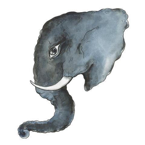 Head of elephant フォト