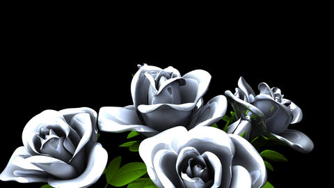White Roses Bouquet on Black Text Space Animation