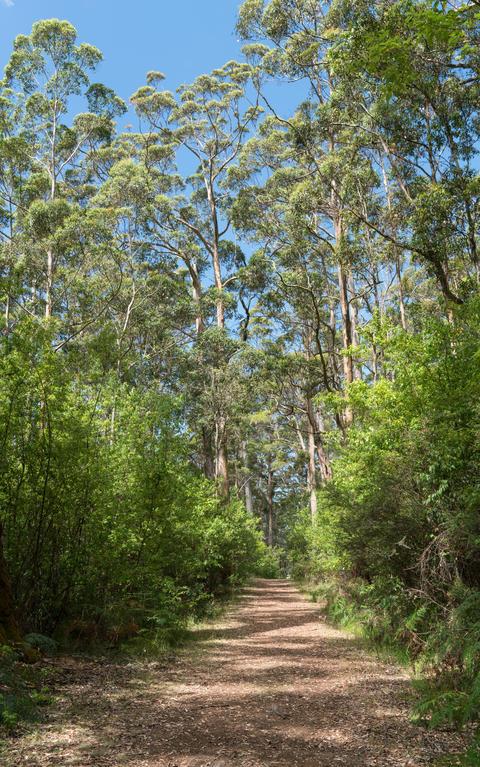 Porongurup National Park, Western Australia Photo