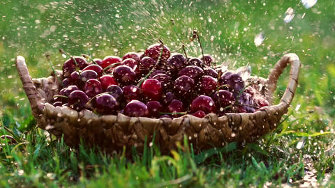 Close-up wash under running water red cherry berries in baskets standing on Footage