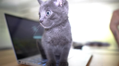 cute kitten playing on laptop GIF