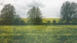Fields of rape seed from express train window UK ビデオ