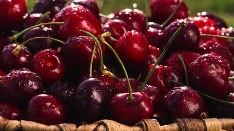 sweet fresh cherries with dew drops, 4k Live Action