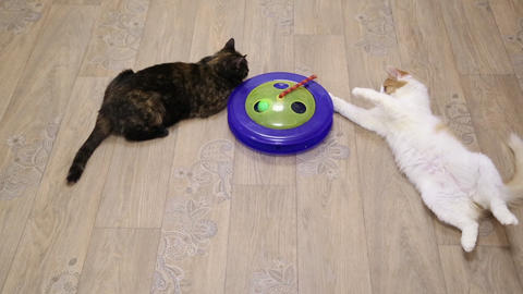 Two cats playing game on the floor Footage