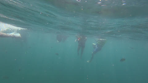 Underwater view of people snorkeling in Andaman Sea ビデオ