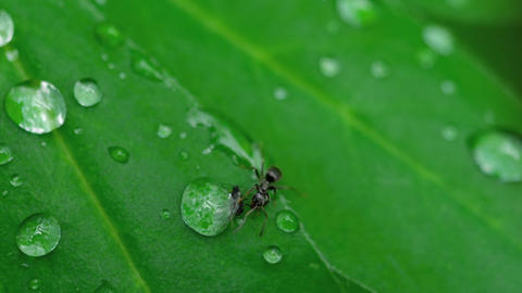 Close-up ant and aphid GIF