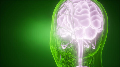 science anatomy scan of human brain and nerves glowing Footage