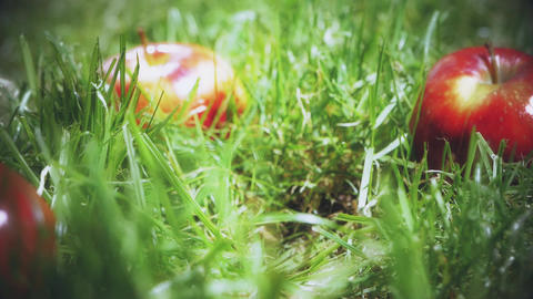 Slow motion shot of red apple falling on the grass GIF