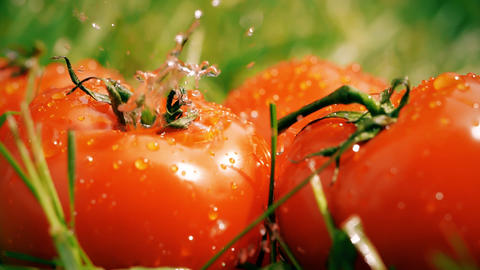 Slow motion shot of water being poured onto ripe tomatoes GIF