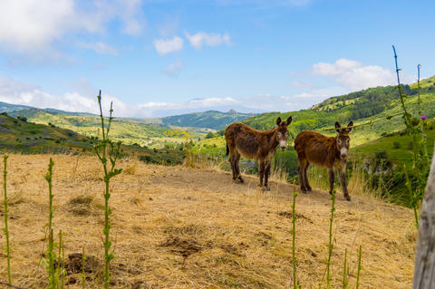 Two donkeys on a mound in a meadow in the mountains Fotografía
