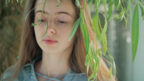 portrait of a beautiful woman with branch of weeping willow Footage