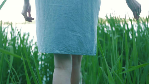 a girl walks along a small wooden bridge by the lake in the reeds Live Action
