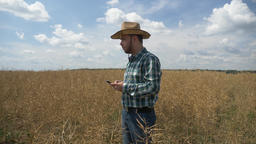 Farmer texting on the smartphone into the canola plantation ビデオ