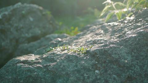 Woman hiker climbs steep rocky terrain ビデオ