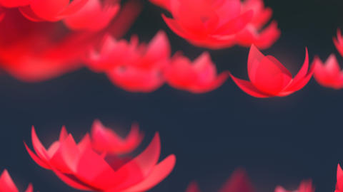 Lotus flower falling animation Stock Video Footage