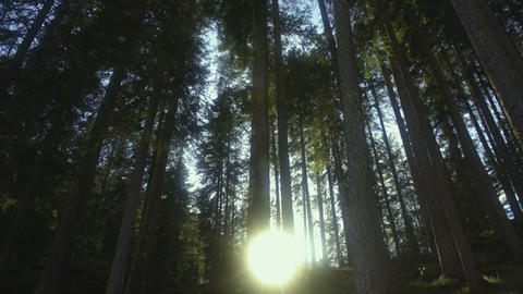 Sun breaking through pine trees in Dolomites forest, beautiful nature, Italy Live Action