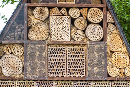Insect hotel for brood care フォト