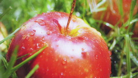 Slow motion shot of water drops falling onto red apple Footage