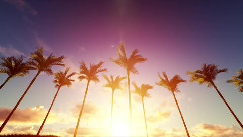 Sunrise Under Palms Animation