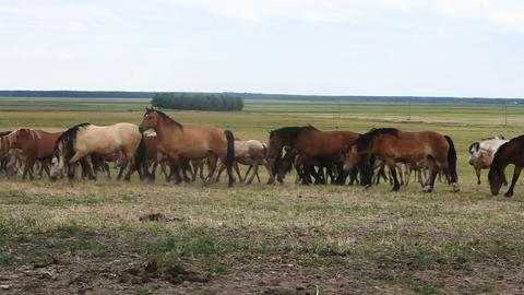 Growing horses breeding breed Footage