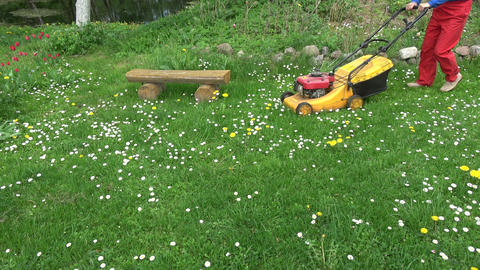 Farmer yard cut spring grass with lawn mower Live Action
