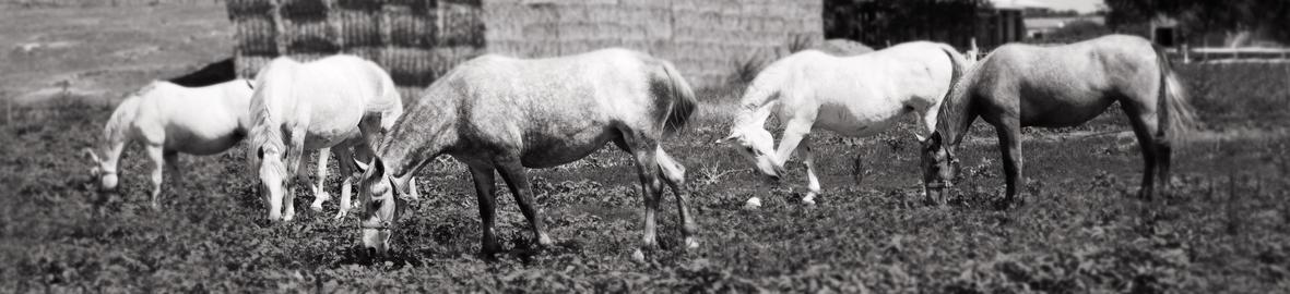 Beautiful Horses At The Farm Feeding at Pasture フォト