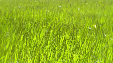 Grass meadow on a windy day Footage