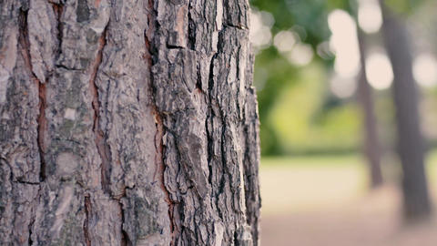 Tree trunk with a blurred background ライブ動画