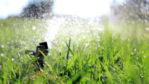 Sprinkler Watering Grass Footage