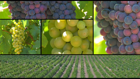 Grapes Filmmaterial