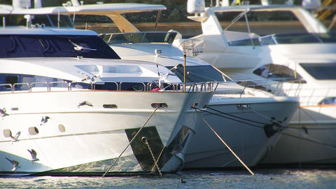 Yachts at the Pier Footage