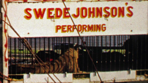 1967: Swede Johnson's performing circus tiger behind iron bars Live Action