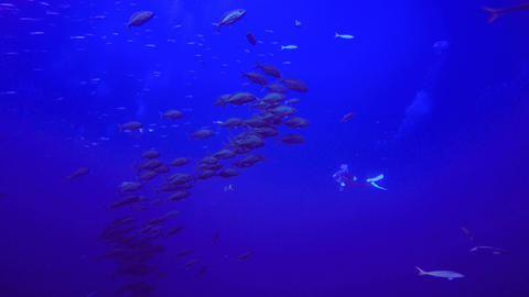 Underwater videographer and a handful of fish of the Jack fish Footage