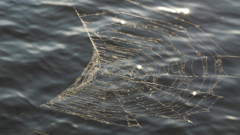 Spider Web On The Water Background Summer GIF