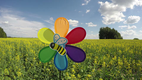 Colorful windmill toy on rapeseed field and bee picture, time lapse Footage