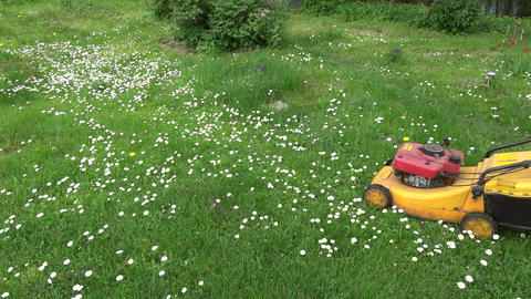 gardener in farm cut grass with lawn mower Live Action