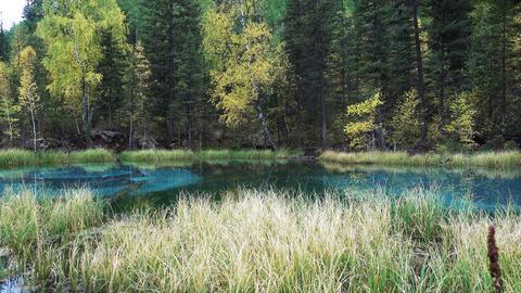 Blue Geyser Lake in Altai Forest ビデオ