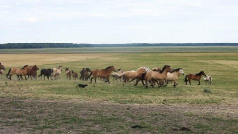 A herd of horses running around in the pasture field Filmmaterial