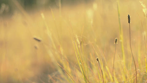 Wild grass with bokeh effect Stock Video Footage