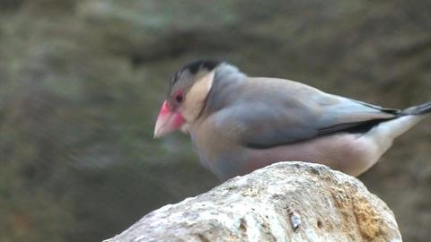 Bird on Rock ビデオ
