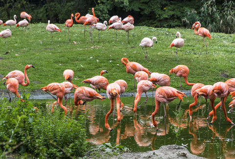 Pink flamingos in nature フォト