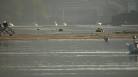 Birds on sandbanks 4 ビデオ