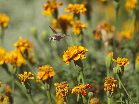 Butterfly is drinking nectar from flover フォト