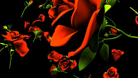 Falling Red Roses On Black Background CG動画