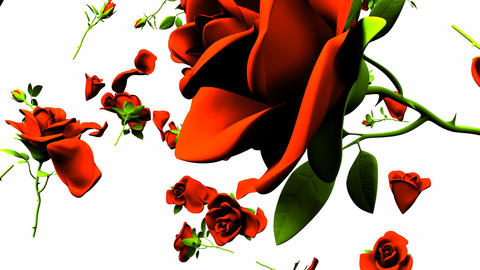 Falling Red Roses On White Background CG動画