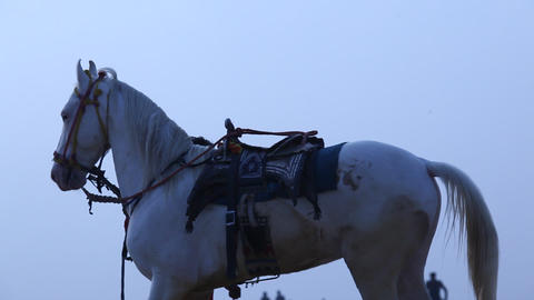 White Horse in the desert Footage