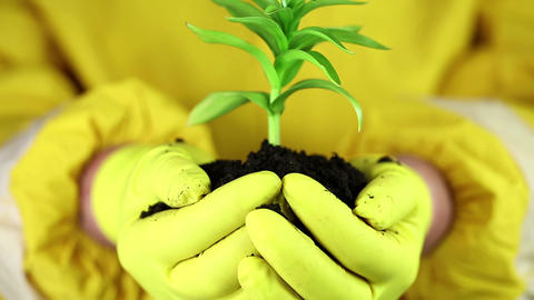 Man in yellow protective suit holds in hands soil and green young plant Footage