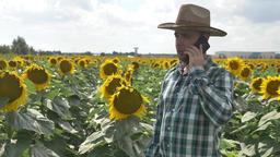 Farmer talking on the smartphone into the sunflower plantation Archivo